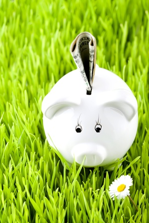 Piggy bank on grass with money photo
