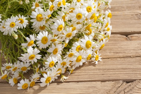 camomile flower on wood Stock Photo - 21440777