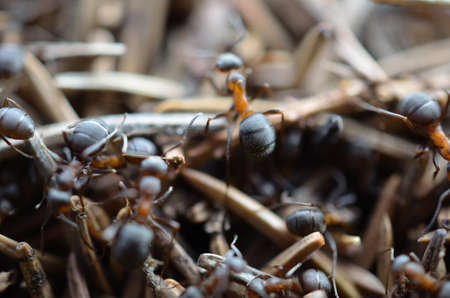 Ants in a anthill macro photo photo