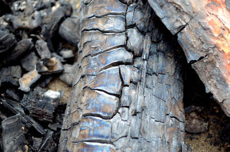 charred: Scorched and charred wood Stock Photo