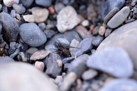 flauna: big spider on rocky ground in summer macro photo