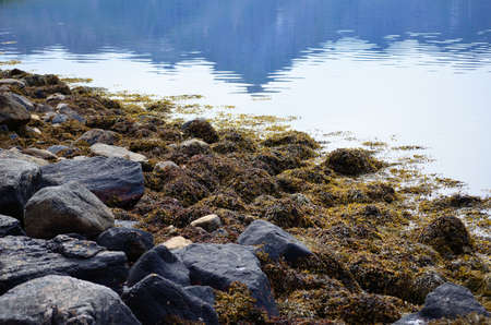 sooth: summer sea shore covered in thick seaweed