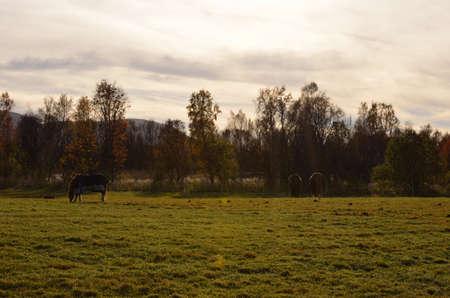 Three fantastic horses grazing in the autumn sun photo