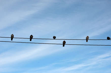 pidgeon: Fantastic vivid pidgeon flock sitting on a telephone wire in the autumn sun close up Stock Photo