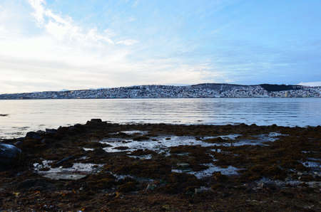 deep freeze: long seaweed covered sea shore with tromsoe city island in background with vibrant blue sky