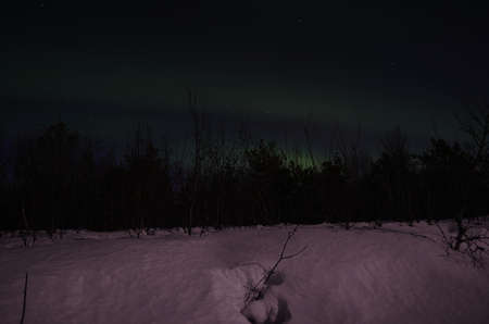 polaris: Vivid northern light, aurora borealis in the arctic winter night over forest tree line