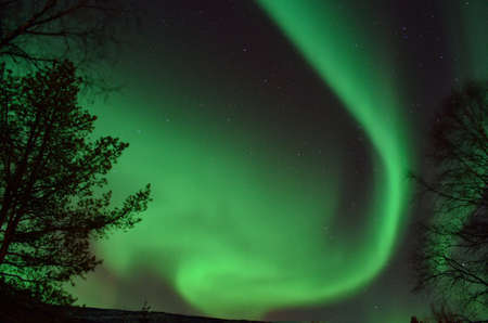 Big vivid and strong aurora borealis lighting up the night sky behind trees with motion and colour photo
