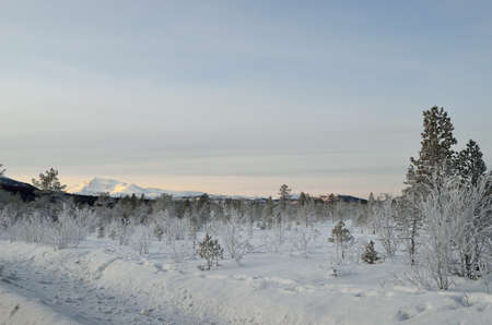 artic circle: Thick ice cover trees and plants after extreme cold with blue sky and snow
