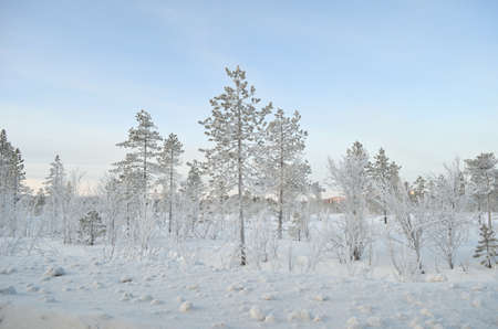 Thick ice cover trees and plants after extreme cold with blue sky and snow photo
