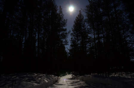artic circle: dark pine tree forest and forest road illuminated by moonlight
