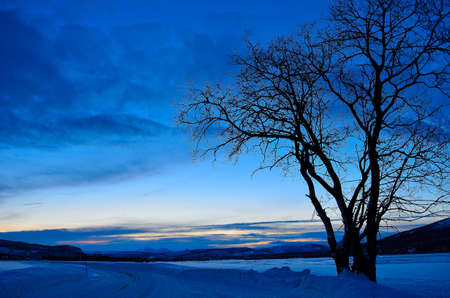 artic circle: Beautiful tree in front of snow filled field with snow covered mountain in the background