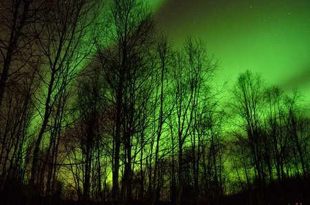 polaris: Aurora borealis makes beautiful shapes on the night sky with a fine birch forest in the foreground Stock Photo