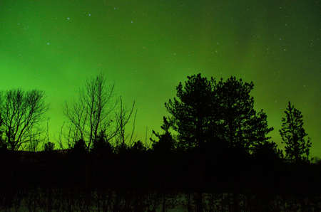 polaris: clear and beautiful aurora borealis, northern light on the arctic night sky in winter