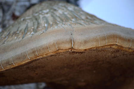 big fungus on old tree in nature macro photo photo