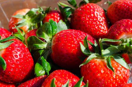 sweet red vibrant strawberries in easter sunlight Stock Photo