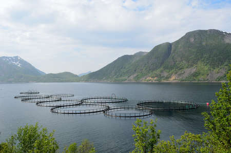 aquaculture farming in fjord water surrounded by mountains