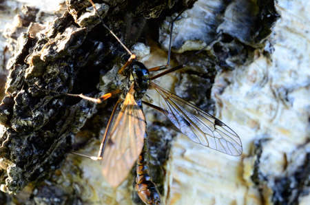 odonata true dragonfly in summer sun on birch tree macro photo photo