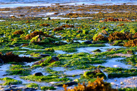 beautiful sea shore covered in vibrant green algae in autumn sunlight photo