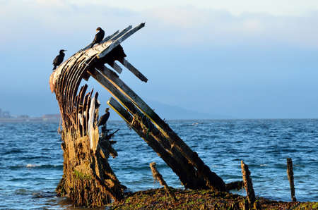 cormorant birds sitting on a wooden ship wreck in a fjord with mountains shrouded in thick fog photo