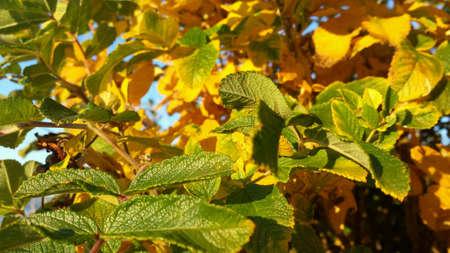 vibrant colours: Vibrant colours on small tree in autumn Stock Photo