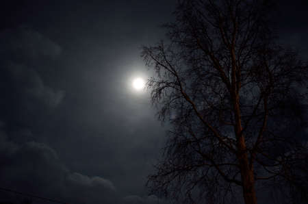 artic circle: full moon in arctic circle with forest and tree silouette Stock Photo