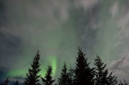 artic circle: majestic aurora borealis in arctic circle winter landscape