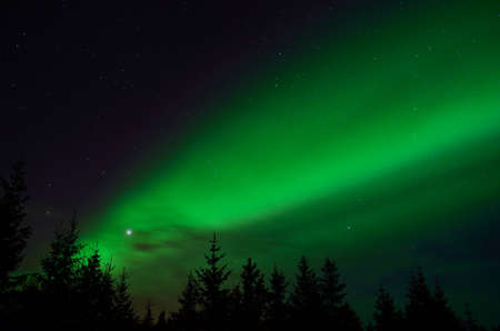 green: solar flare creates strong vibrant aurora borealis on the winter night sky over forest and trees Stock Photo