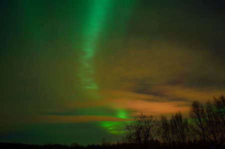 artic circle: vibrant aurora borealis, northern lights over forest and trees in the arctic winter night