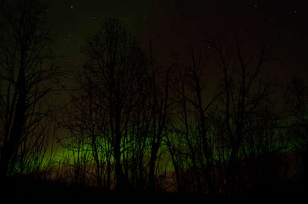 artic circle: Strong vivid and vibrant aurora borealis on the night sky over cold frozen forest in december