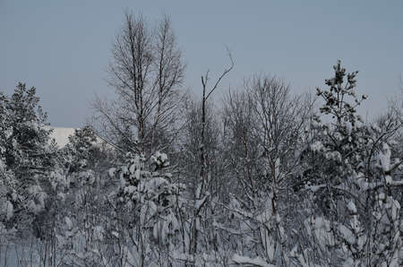 artic circle: frozen forest landscape with snow, ice and frost Stock Photo