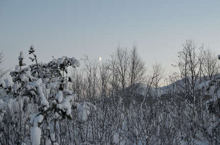 sub zero: frozen forest landscape with snow, ice and frost Stock Photo