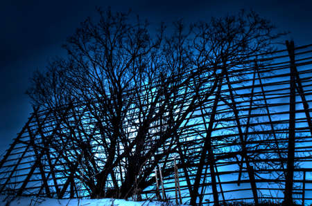 stockfish: beautiful wooden stockfish structure with majestic tree in front on a blue vibrant day in the arctic circle