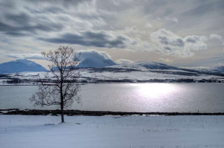 Single tree on snowy field with mountain,sunshine,and blue fjord  photo