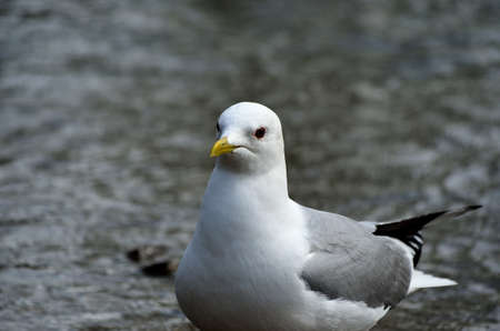 beack: seagull close up in summer