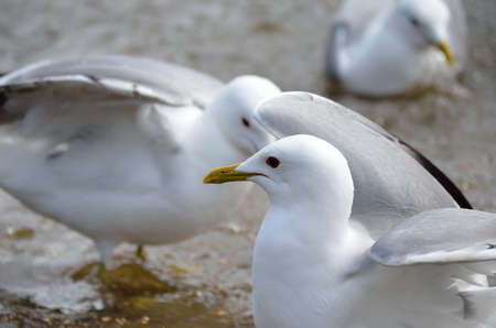 beack: seagulls in summer pond close up