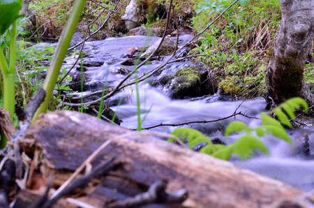 green nature: mountain creek in summer lush green nature Stock Photo