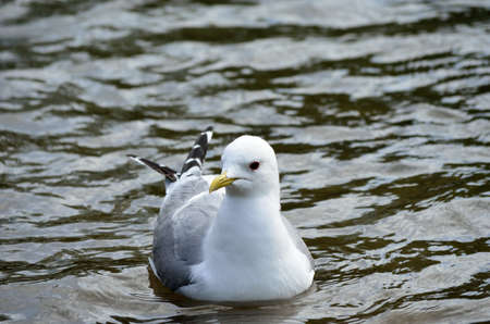 beack: seagull relaxing in summer pond Stock Photo