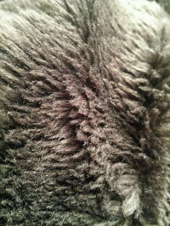 close: Brown fur close up