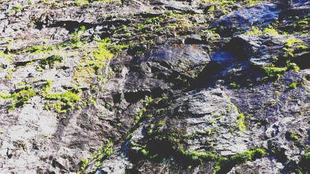 geschniegelt: Wet slick and mossy cliffside in summer sunlight