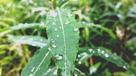 shiny: Serene water droplets resting on long plant leaf after rain shower