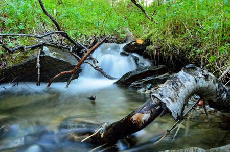 green nature: serene mountain stream in lush green nature