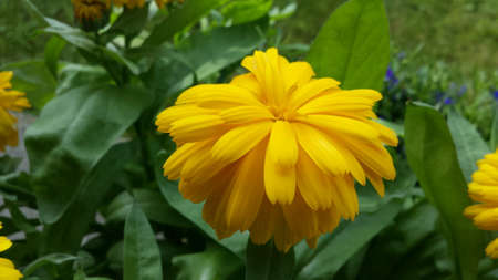 up: Vibrant yellow summer flower close up Stock Photo