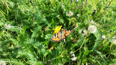 colour: Beautiful colour and shape and form on butterfly in summer pasture close up