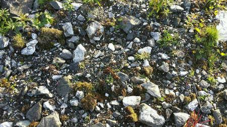 bright: Rocky summer seashore