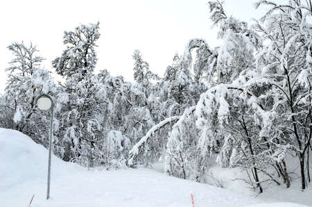 heavy snow: heavy snow on forest with light pole