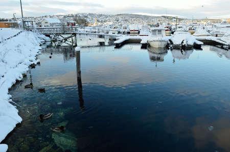 webfoot: beautiful male mallard duck swimming in harbor in wintertime Editorial
