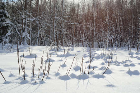 shadow: small twigs in deep snow casting shadow Stock Photo