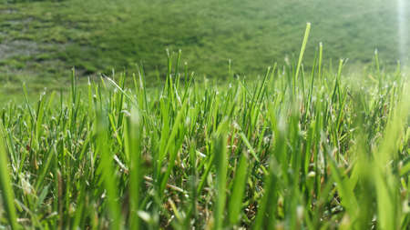 detail: Vibrant green summer grass in sunshine Stock Photo