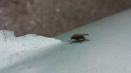 metal: Small fly sitting on light blue metal surface