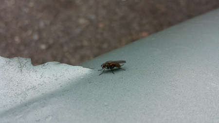 surface: Small fly sitting on light blue metal surface